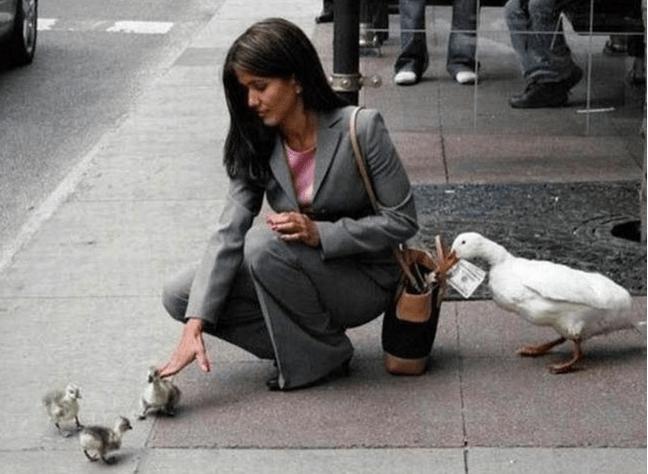 photos of animal teamwork