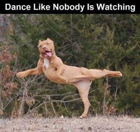 a funny meme of a dog dancing - cover for a list of funny dancing animals
