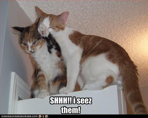 Cats,hiding,shh