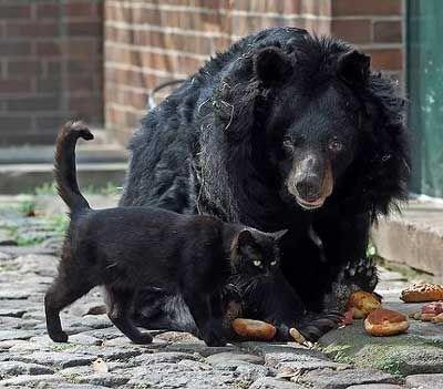 stray cat BFFs zoo bear berlin - 3200773