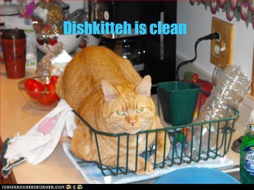 Dishkitteh is clean