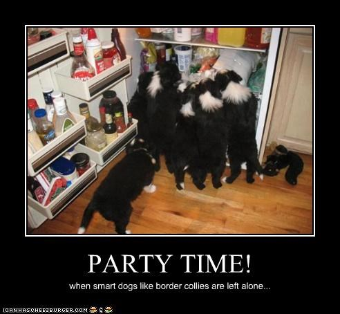 border collie,food,fridge,Party,puppies,smart