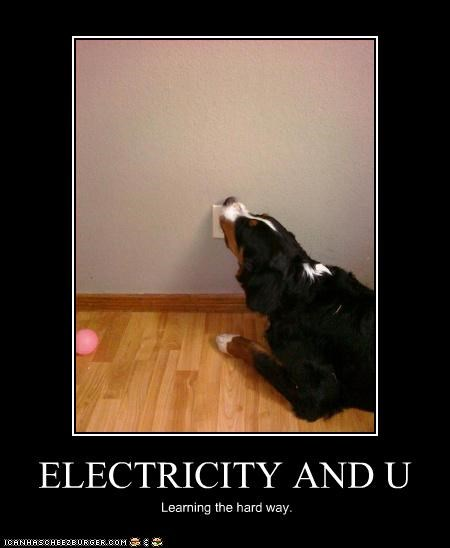 australian shepherd,electricity,lick,ouch,outlet