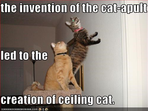 the invention of the cat-apult led to the creation of ceiling cat.