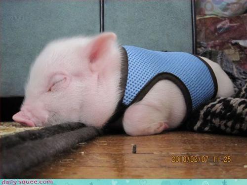 costume naps pig - 3203976448