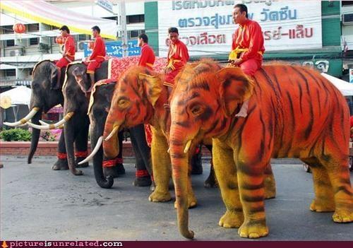 animals elephants genetic mutation paint Party wtf - 3204020480