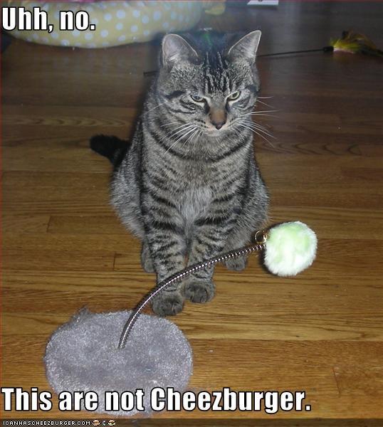 Cheezburger Image 3204264704