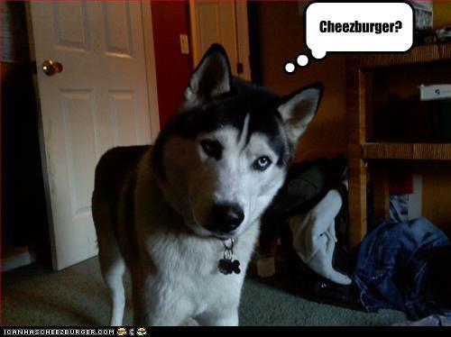 Cheezburger Image 3204688384