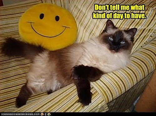angry cat smiley face - 3204865024
