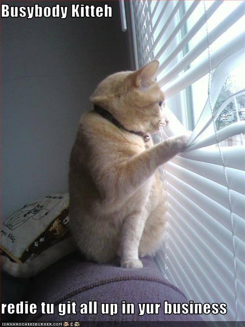 blinds cat nosy spying - 3205307392