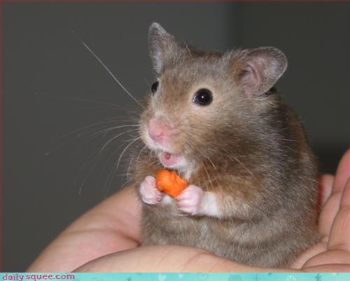 carrot hamster noms - 3205332224