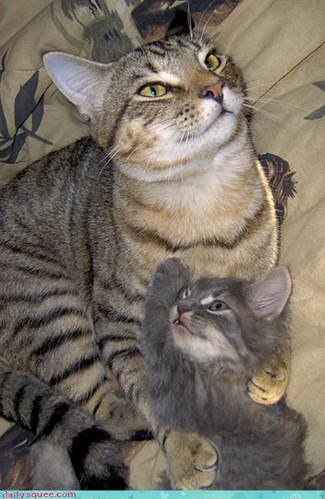 cat kitten mom - 3205916672