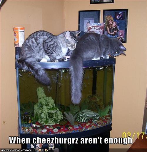 Cheezburger Image 3206170112