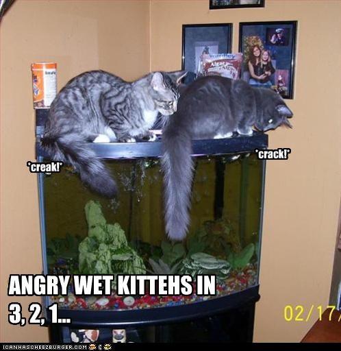 3 2 1 aquarium Cats - 3206234624
