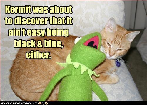 cat kermit puppet violence - 3206419968