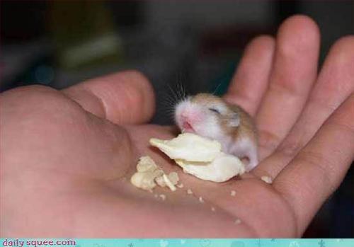 face,hamster,noms