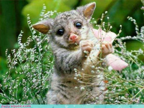 cute sugar glider what is it - 3206695680