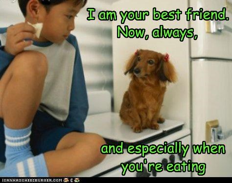 best friend,daschund,eat,human,nom