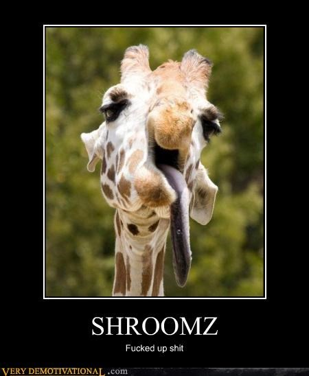awesome demotivational drugs giraffes hilarious shroomz - 3206950400