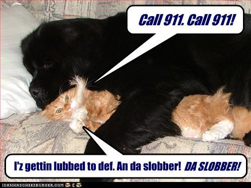 Call 911. Call 911! I'z gettin lubbed to def. An da slobber! DA SLOBBER!