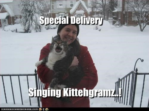 cat,delivery,singing