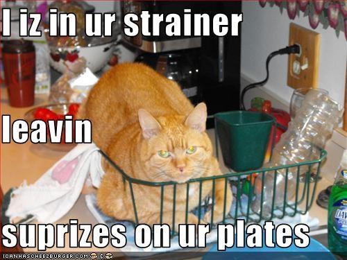 Cheezburger Image 3207811840