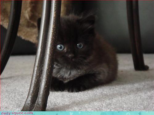 cat face kitten - 3207904512