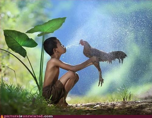 chicken,kids,the jungle,wildlife,wtf