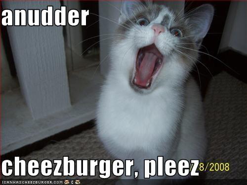 Cheezburger Image 3208182272