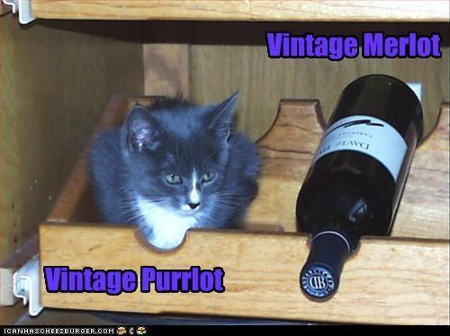 cat merlot vintage wine - 3208319744