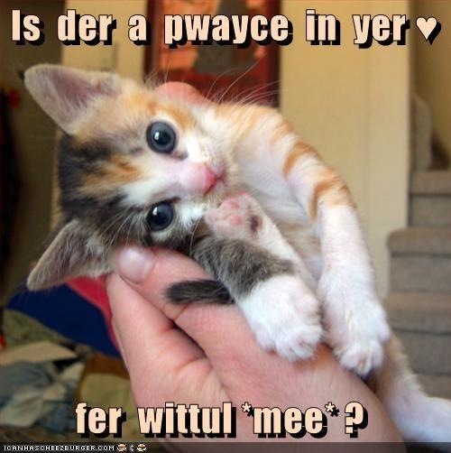 adorable kitten - 3208626944