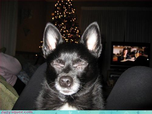 cute dogs face - 3209989888