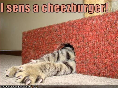 Cheezburger Image 3210461440