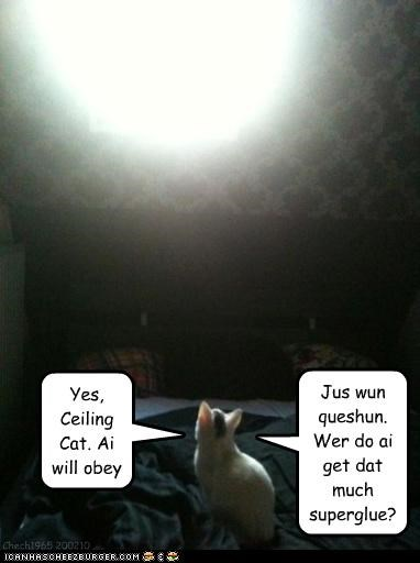 Yes, Ceiling Cat. Ai will obey Jus wun queshun. Wer do ai get dat much superglue? Chech1965 200210