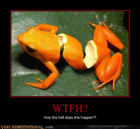 orange,photoshop,peeled,frog