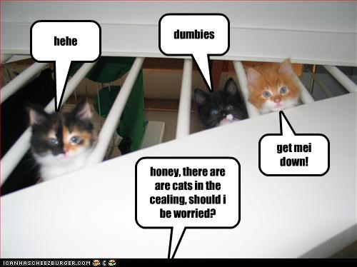 honey, there are are cats in the cealing, should i be worried? hehe dumbies get mei down!