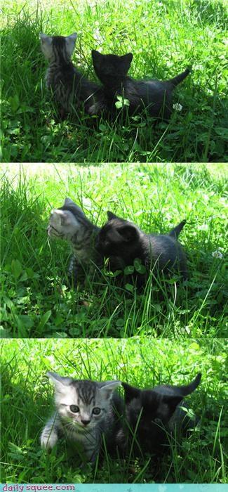 cute friends kitten - 3212730112