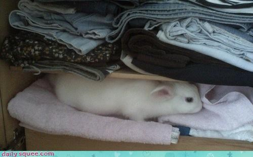 bunny Fluffy rabbit - 3212735488