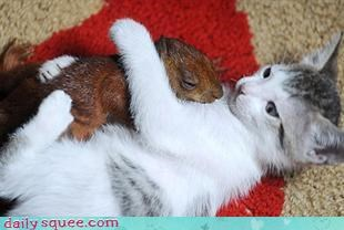 cat kitten squirrel - 3212809728