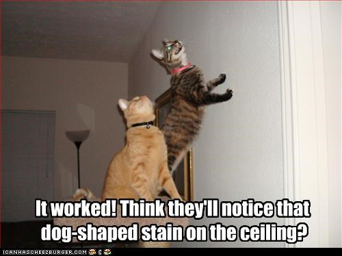 It worked! Think they'll notice that  dog-shaped stain on the ceiling?