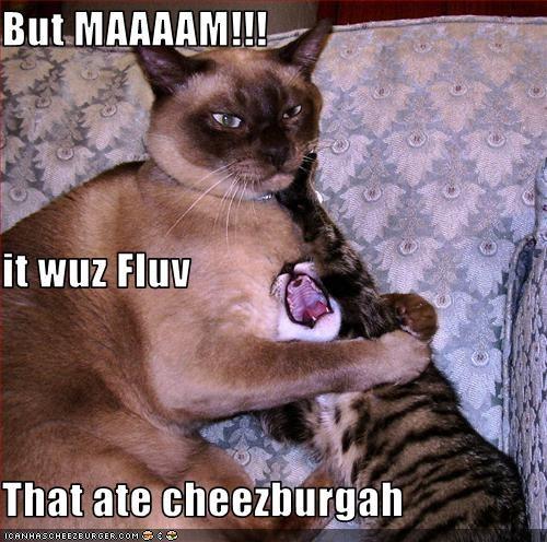Cheezburger Image 3213794560