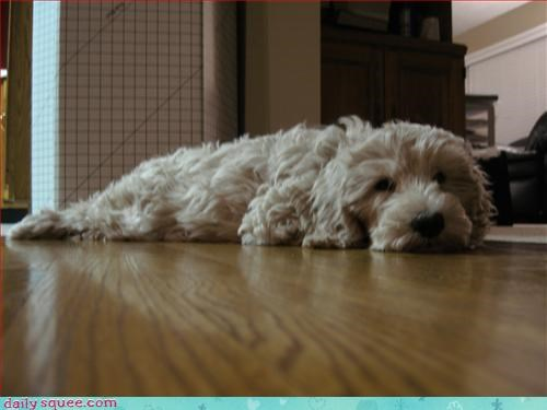 bathmat curly dogs - 3214458112