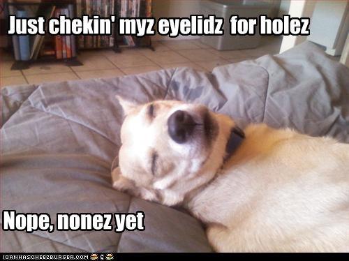 Just chekin' myz eyelidz for holez Nope, nonez yet