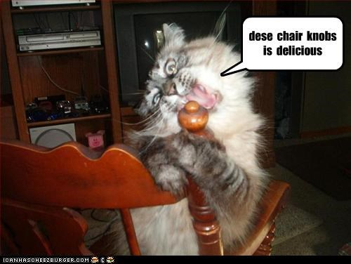 Cheezburger Image 3215085056