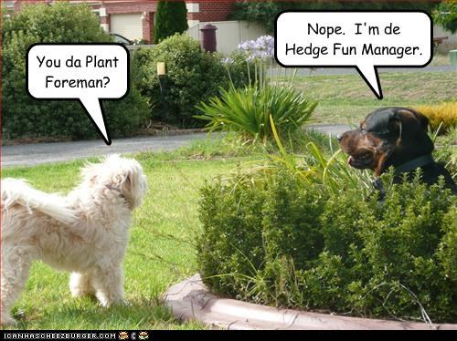 hedge,outside,pun,rottweiler,whatbreed,work