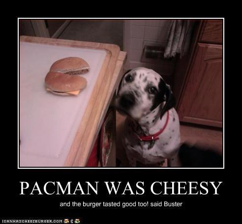 Cheezburger Image 3215358464