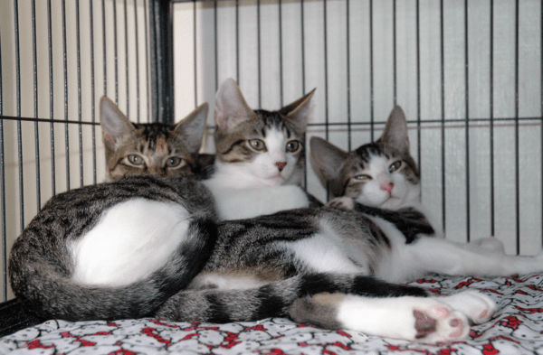 a photo of three cats - cover for a story about cats and kittens going to a new rescue shelter