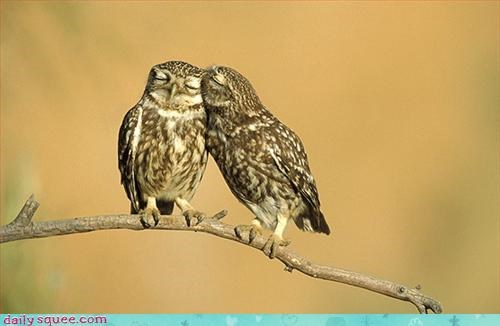 birds,love,Owl