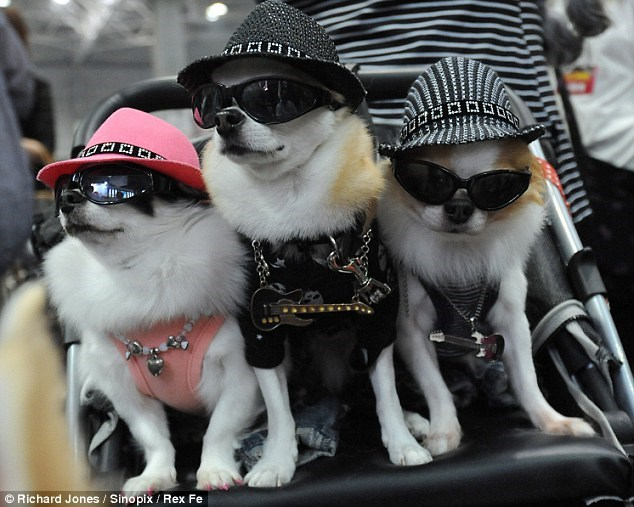 animals dressed in clothes before going out