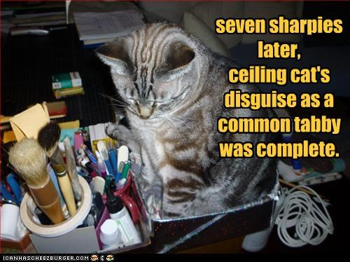 ceiling cat disguise plotting sharpie sneaky tabby - 3216635648